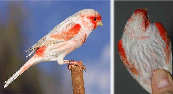 achát opál piros mozaik TypII.jpg