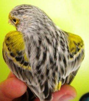 achát sárga mozaik Typ II 1..jpg